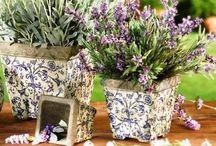 lavender-levandule