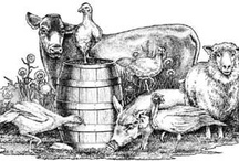 Sources for Pastured Meat / by Christy Reeder