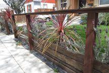 Reno front yard / Front yard