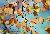 DOAMNA TOAMNA / autumn