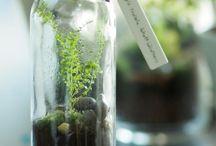 Barattoli con piante e muschio
