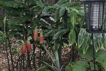 renees organics Mermaid Garden