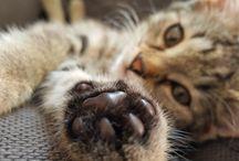 koteł Sisi