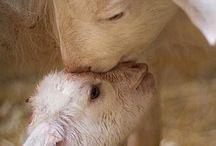 animali love