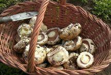 Jardinería hongos