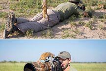 ostatní zvířátka