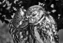 You Obviously Love Owls Y.O.L.O. / by Jayde Mitchener Tatum