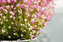 Flowers, herbs, gardens