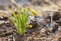 Bilder fra hjertet - vårens gleder / I vårens skjønnhet ligger vårens magi, naturens magi...  Se flere bilder og les inspirerende ord på bilderfrahjertet.com