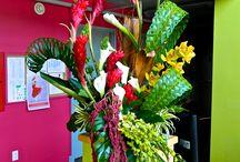 Palm weaving arrangement