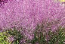 Trávy / Grasses