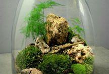 Terarium, zahradničení