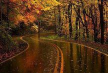 Autumn/Fall / by Annamarie Lujan-Greene