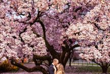 Gorgeous Engagement Photos