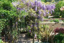 Zahrada / Květy