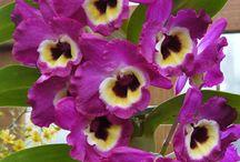 Krukväxter / Krukväxter i olika sorter Blommande o gröna