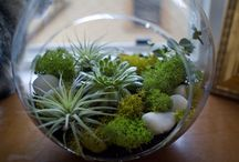 Terrariums / Keep up with the latest trend of terrariums. They are easy and fun to make and will liven up your desk, dining room table, or other well-lit spot!