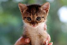 Adorables / Too cute
