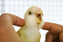 Healing tremendous!!!!!! / Parakeet<3