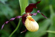 Вдохновение природой. Цветы