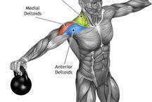 como trabajar musculos