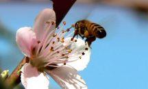 #BanNeonics bc no bees, no food