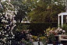 Backyard Inspiration / by Vidhya Sinnatamby