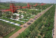 Парки сады