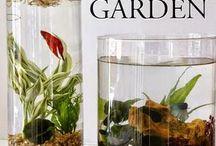 Indoor Water Plants