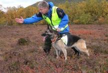 Redningshunder / Norske Redningshunder er en landsomfattende, frivillig, humanitær redningsorganisasjon. Organisasjonen utdanner hunder og hundeførere til bruk i redningstjenesten, og organiserer beredskap for disse ekvipasjene gjennom kontakt med hovedredningssentralene og lokale politimyndigheter.