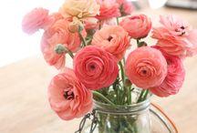 fleurs / bouquets arbres en fleurs, jardins fleuris