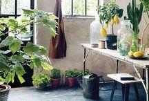 Dekotrend Frühling 2017: Urban Greenery / Frühling ist Gartenzeit! Gärtnern ist eine unserer liebsten Beschäftigungen draußen und sobald die ersten Sonnenstrahlen die Grashalme und Blümchen aus der Erde kitzeln, ist es Zeit, die Deko aus dem Keller zu holen. Farben und Materialien wie Zitronengelb, Grün in allen Facetten, Beton und altes Holz verpassen der Dekoration in diesem Jahr einen urbanen Look. Es ist der perfekte Mix zwischen Grüner Daumen und Factory.