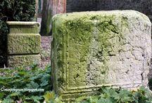 Muschio / Moss / Il fascino del muschio in giardino