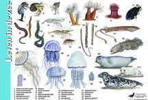 Vissen enz