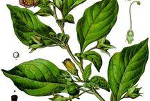 rare plants of lombardia