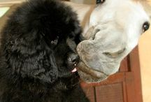 Dogs / Horsin' Around with the Hounds... Because who doesn't like dogs?!? :-)