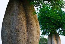 Ağaçları kucakla