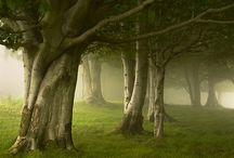 Trees / by Nancy Cook