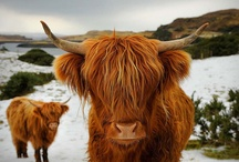 Beasties you might see in the Highlands