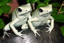 Frogs / by Connie Carlsen
