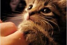 Cute / by Brooke Pownceby