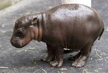 Hippo & Hedgehog