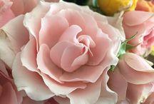 Kit's Blooms / Flowers