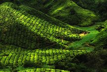 Beautiful Malaysia / All places and scenery of beautiful Malaysia #malaysia