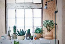 Plants / Interior, plants