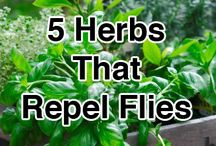 Herb and veggie garden / Herbs and veg to eat and repellent