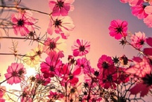 Gardens, Plants, Flowers