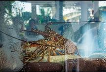 Live Lobster / Come and enjoy FRESH Lobster from the Saba Bank at Tropics Cafe! Pick your lobster from our live lobster tank, or enjoy a selection of lobster inspired dishes from both our lunch and dinner menu. Tel: +5994162469 for reservations. #sabatropics #freshlobster #saba #visitsaba #spinylobster