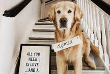 Photo Ideas for your Pets