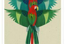 Papugi ary (ara)